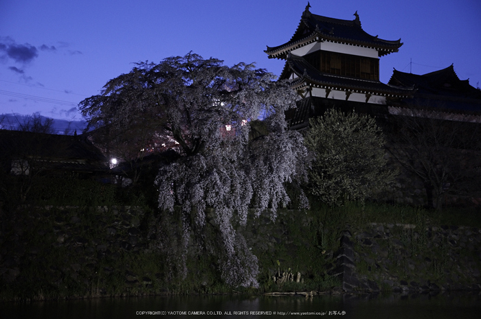 郡山城跡,桜(PK3_8886,F4,40mm)2014yaotomi_.jpg