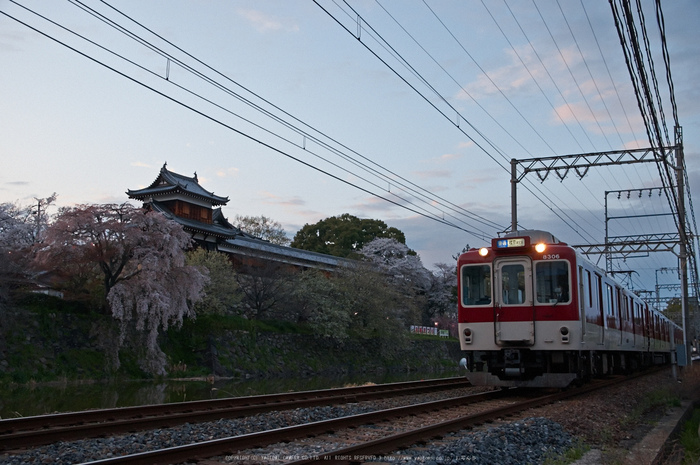 郡山城跡・桜(PK3_8819,F4.5,26mm)2014yaotomi_.jpg