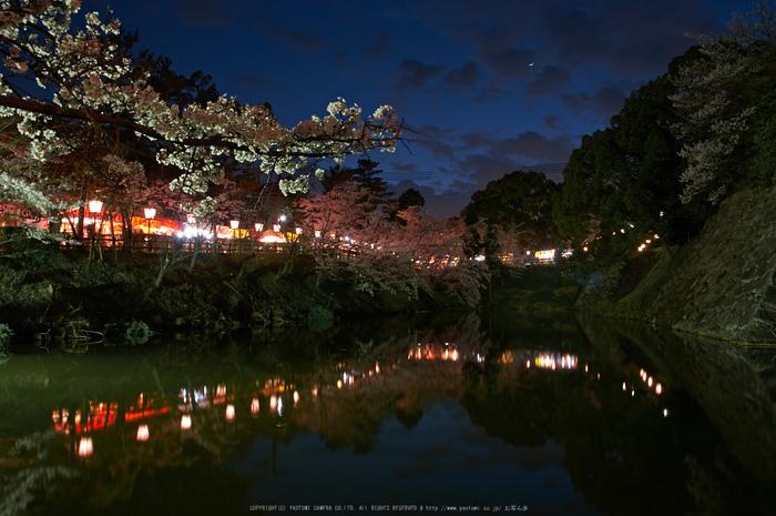 郡山城跡・桜(PK3_8898,F8,17mm)2014yaotomi_.jpg