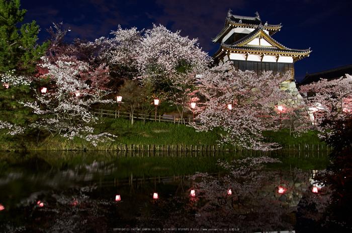 郡山城跡・桜(PK3_8911,F5.6,17mm)2014yaotomi_.jpg