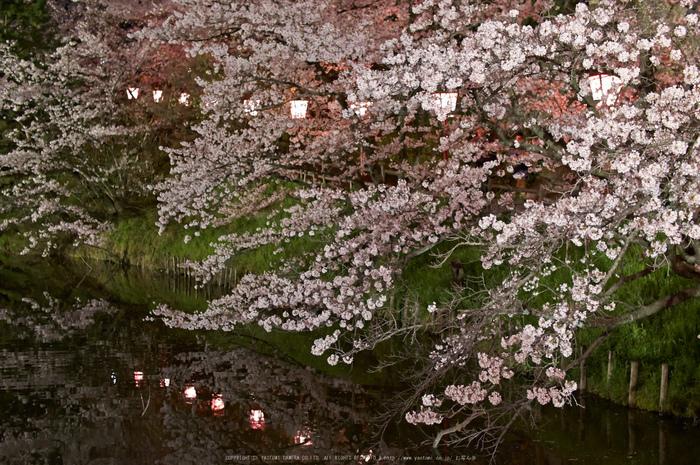 郡山城跡・桜(PK3_8919,F2,30mm)2014yaotomi_.jpg