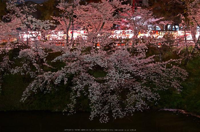 郡山城跡・桜(PK3_8937,F2,30mm)2014yaotomi_.jpg