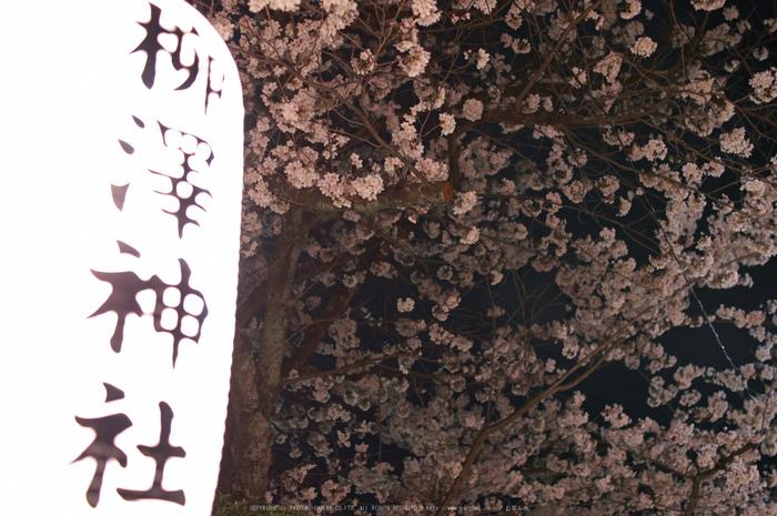 郡山城跡・桜(PK3_8954,F2,30mm)2014yaotomi_.jpg