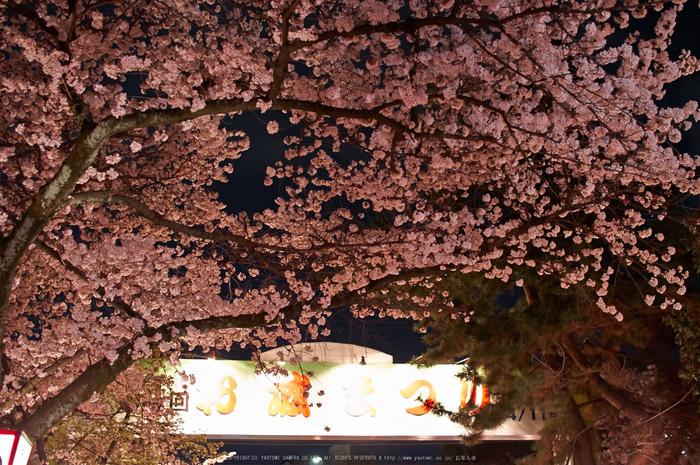 郡山城跡・桜(PK3_8957,F2,30mm)2014yaotomi_.jpg
