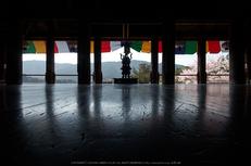 長谷寺,桜(PK3_8388,F13,13mm)2014yaotomi_.jpg