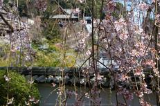 長谷寺,桜(PK3_8528,F9,34mm)2014yaotomi_.jpg