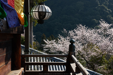 長谷寺・桜(PK3_8393,F9,45mm,FULL)2014yaotomi_.jpg