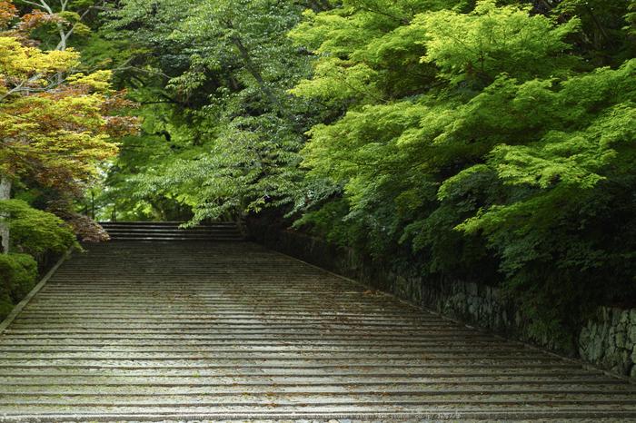 光明寺・新緑(SDIM0557,F2)2014yaotomi_.jpg