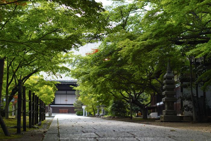 光明寺・新緑(SDIM0579,F1.8)2014yaotomi_.jpg