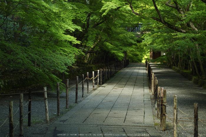 光明寺・新緑(SDIM0613,F2.2)2014yaotomi_.jpg