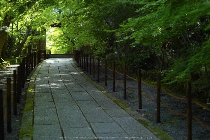 光明寺・新緑(SDIM0644,F1.8)2014yaotomi_.jpg