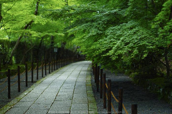 光明寺・新緑(SDIM0648,F1.4)2014yaotomi_.jpg