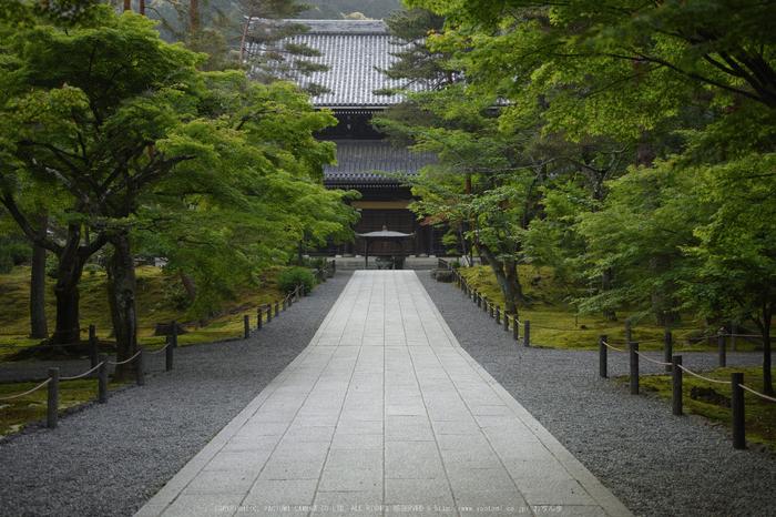 南禅寺,新緑(SDIM0048,35mm,F2)2014yaotomi_.jpg