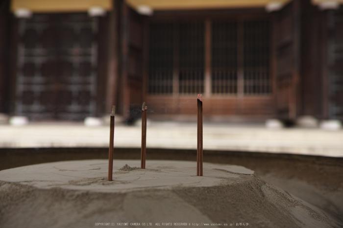 南禅寺,新緑(SDIM0076,23mm,F2.2)2014yaotomi_.jpg