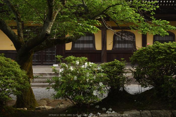 南禅寺,新緑(SDIM0081,24mm,F2.2)2014yaotomi_.jpg