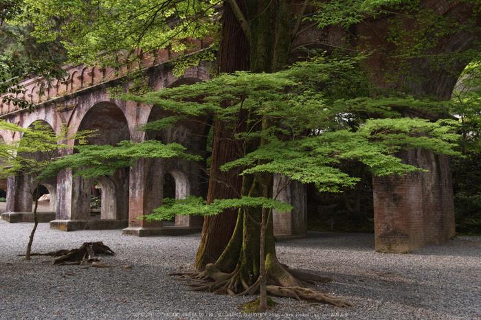 南禅寺,新緑(SDIM0099,24mm,F4)2014yaotomi_.jpg