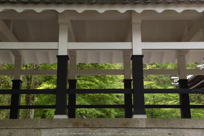 南禅寺,新緑(SDIM0149,--mm,F--)2014yaotomi_.jpg