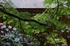 室生寺,石楠花(DSCF5999,F7.1,70.5mm,FULL)2014yaotomi_.jpg
