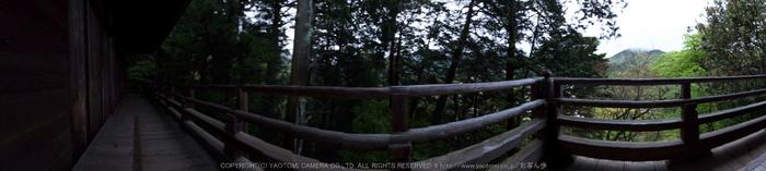 室生寺,石楠花(DSCF6081,F10,10mm)2014yaotomi_.jpg