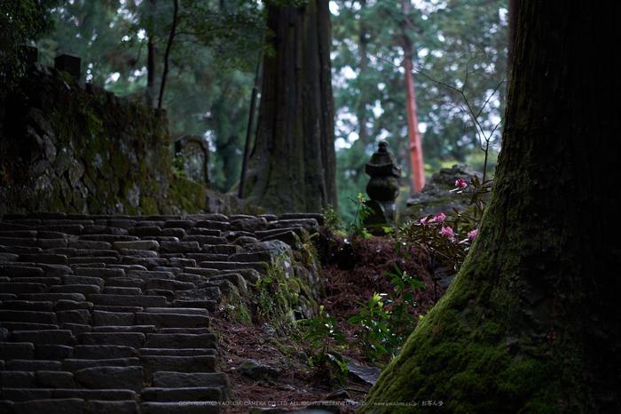 室生寺,石楠花(DSCF6084,F1.4,56mm)2014yaotomi_.jpg