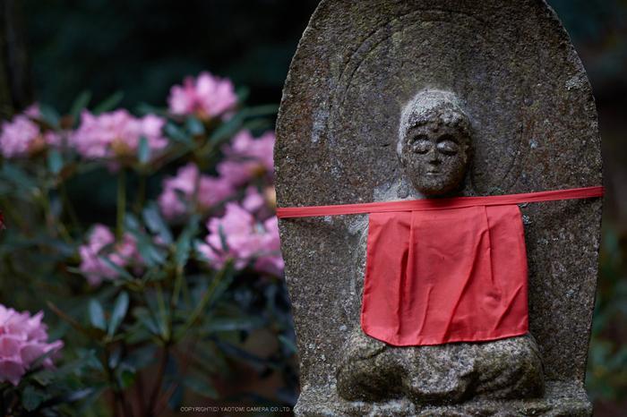 室生寺,石楠花(DSCF6095,F1.6,56mm)2014yaotomi_.jpg