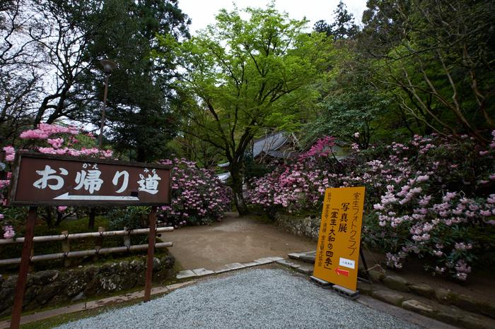 室生寺,石楠花(DSCF6153,F9,10.5mm)2014yaotomi_.jpg