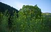 室生湖,新緑(P1040225,F2)2014yaotomi_.jpg