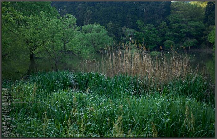 室生湖,新緑(P1040228,F1.7)2014yaotomi_Top.jpg
