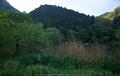 室生湖,新緑(P1040230,F1.7)2014yaotomi_.jpg