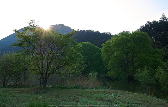 室生湖,新緑(P1040242,F6.3)2014yaotomi_.jpg