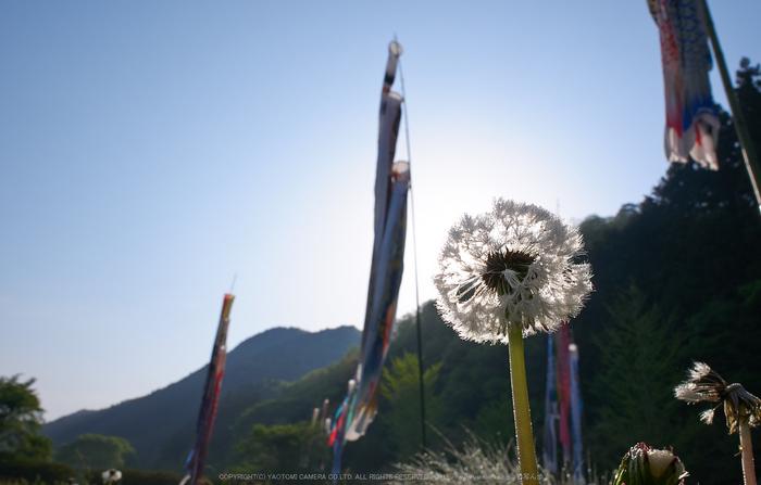 室生湖,新緑(P1040277,F11)2014yaotomi_.jpg