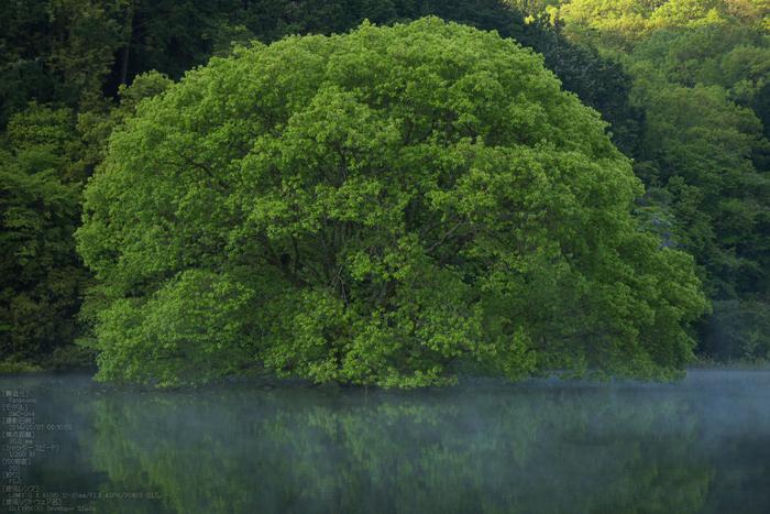 室生湖,新緑(P1120441,30mm,F5,0)2014yaotomi_s.jpg