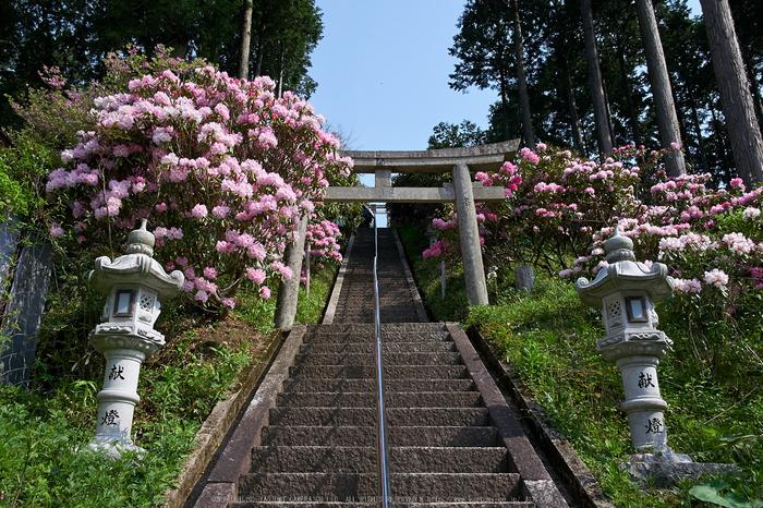 弁財天石楠花の丘(P1040378,F6.3)2014yaotomi_.jpg