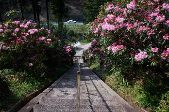 弁財天石楠花の丘(P1040458,F1.8)2014yaotomi_.jpg