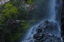 御船の滝,石楠花(SDIM0322,70mm,F13,FULL)2014yaotomi_.jpg