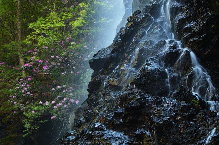 御船の滝,石楠花(SDIM0334,70mm,F13)2014yaotomi_.jpg