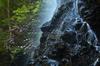 御船の滝,石楠花(SDIM0334,70mm,F13,FULL)2014yaotomi_.jpg