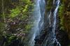 御船の滝,石楠花(SDIM0342,86mm,F20,FULL)2014yaotomi_.jpg