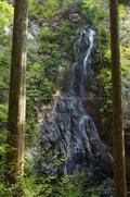 御船の滝,石楠花(SDIM0369,23mm,F14,FULL)2014yaotomi_.jpg