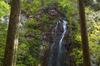 御船の滝,石楠花(SDIM0370,--mm,F--,FULL)2014yaotomi_.jpg