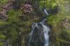 御船の滝,石楠花(SDIM0388,70mm,F14,FULL)2014yaotomi_.jpg