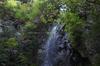 御船の滝,石楠花(SDIM0402,35mm,F1.8,FULL)2014yaotomi_.jpg