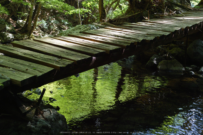 御船の滝,石楠花(SDIM0430,35mm,F5.6)2014yaotomi_.jpg
