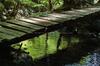 御船の滝,石楠花(SDIM0430,35mm,F5.6,FULL)2014yaotomi_.jpg