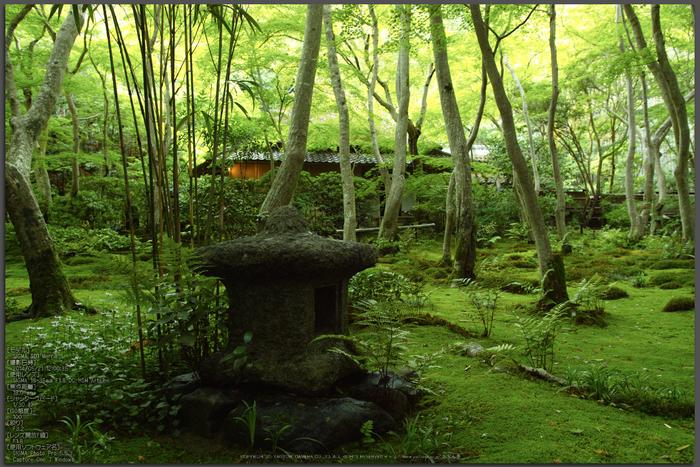 祇王寺・新緑(SDIM0466,F3.2)2014yaotomi_top.jpg