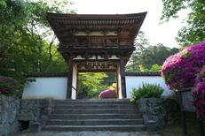 長岳寺,つつじ(P1120477,12mm,F6,3)2014yaotomi_.jpg