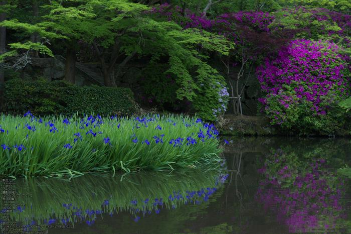 長岳寺,つつじ(P1120483,35mm,F5,6)2014yaotomi_s.jpg