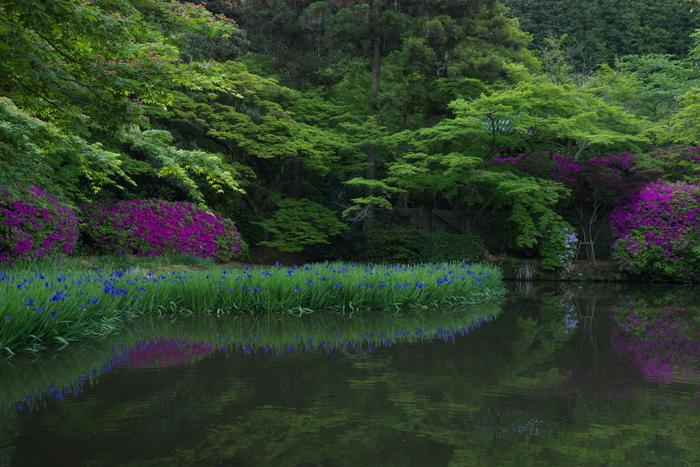 長岳寺,つつじ(P1120484,19mm,F5,6)2014yaotomi_.jpg
