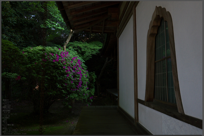 長岳寺,つつじ(P1120590,15mm,F5,6)2014yaotomi_Top.jpg