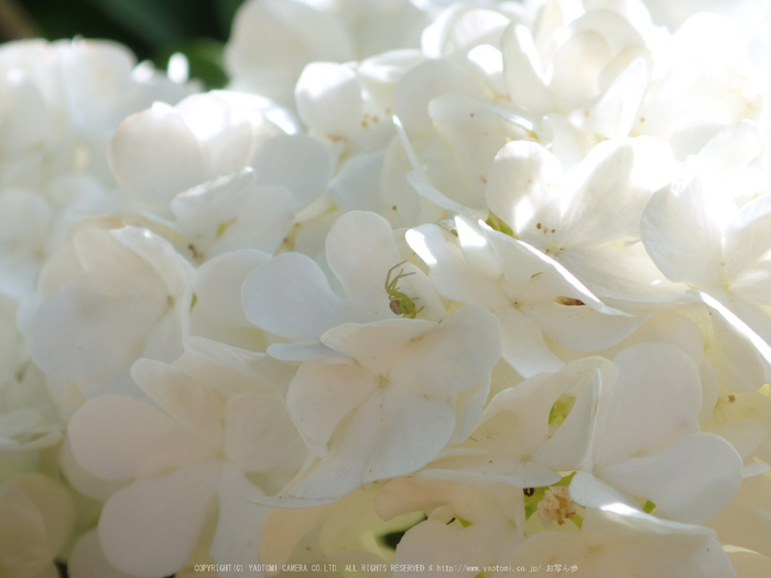 OLYMPUS,TG3(P5240360_東吉野,月うさぎ)2014yaotomi_.jpg